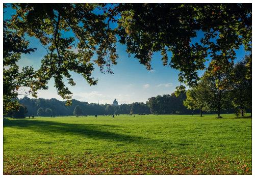 Лужайка парка.