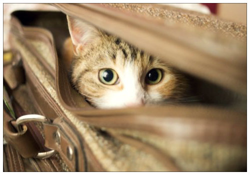 Кот в чемодане.