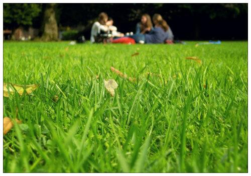 Пикник в парке.