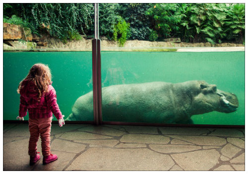 Девочка у вольеры бегемота.