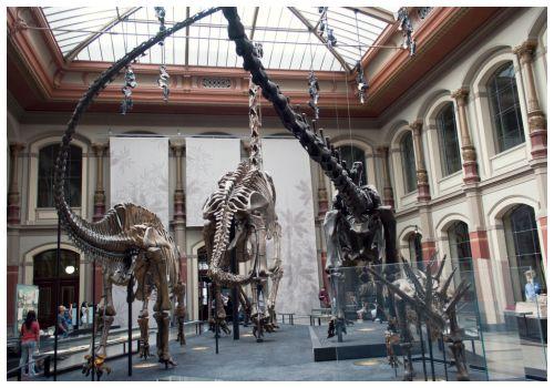 Огромные скелеты.