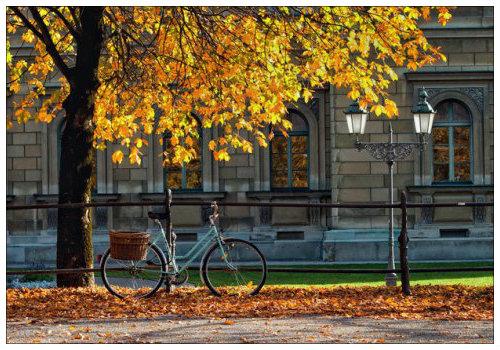 Велосипед под деревьями