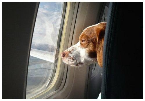 Пес в самолете