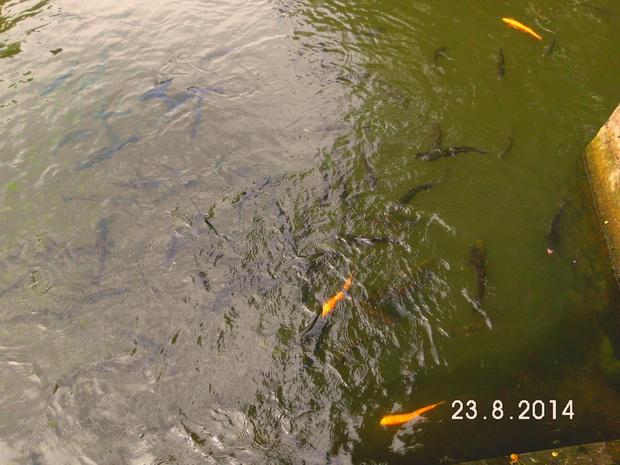 Рыбки в озере.